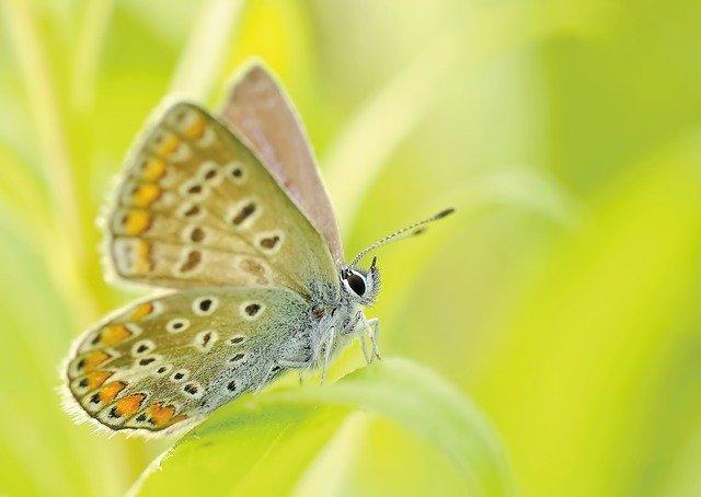 cuantas patas tiene una mariposa