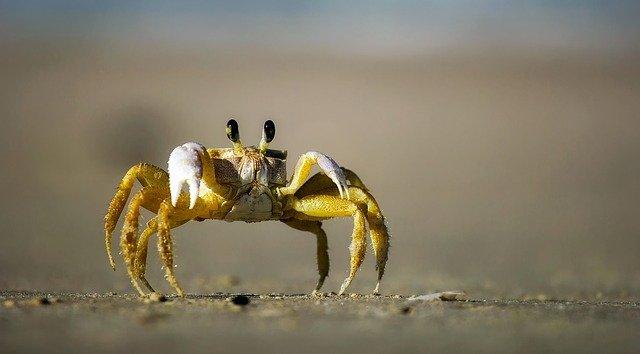 cuantas patas tiene un cangrejo