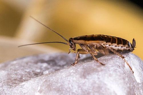 patas de la cucaracha