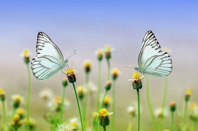 cuantas pata tiene la mariposa