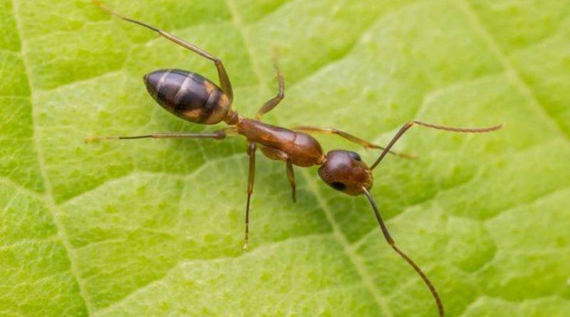 cuantas patas tiene una hormiga
