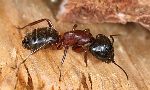 patas de las hormigas